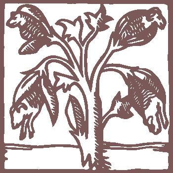 logo Capsicum Natuurstoffen